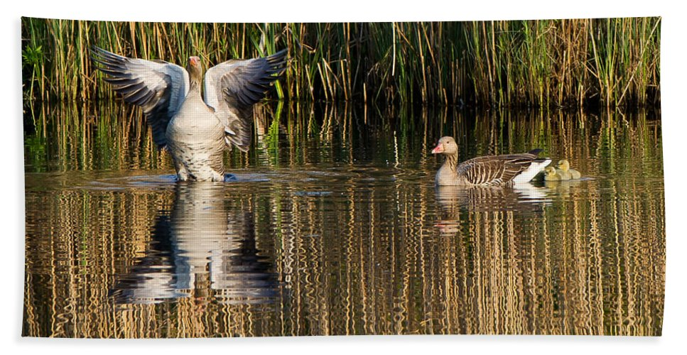 Greylag Goose Family Hand Towel featuring the photograph Greylag Goose Family by Torbjorn Swenelius