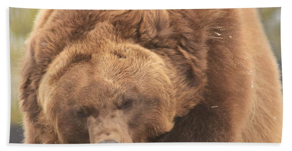 Grizzly Bear Hand Towel featuring the photograph Grizly Lunch by Adam Jewell