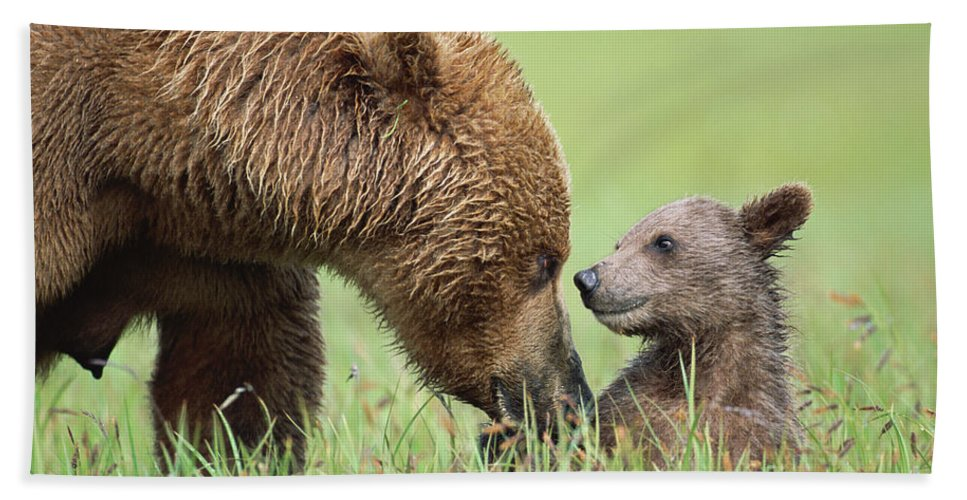 00345260 Bath Towel featuring the photograph Grizzly Bear And Cub in Katmai by Yva Momatiuk John Eastcott