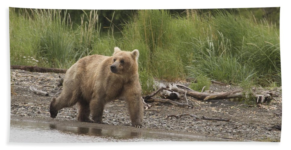Alaska Hand Towel featuring the photograph Grizzly by Dee Carpenter