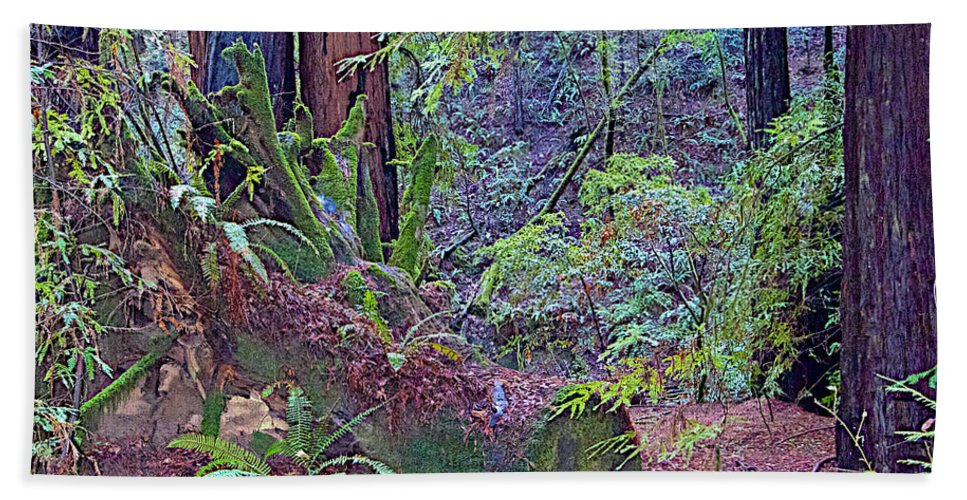 Ground Level Landscape In Armstrong Redwoods State Preserve Near Guerneville Hand Towel featuring the photograph Ground Level Landscape In Armstrong Redwoods State Preserve Near Guerneville-ca by Ruth Hager