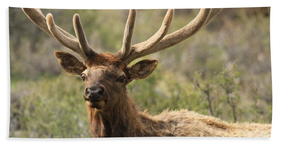 Rocky Mountain National Park Bath Sheet featuring the photograph Growing A Fresh Rack by Adam Jewell