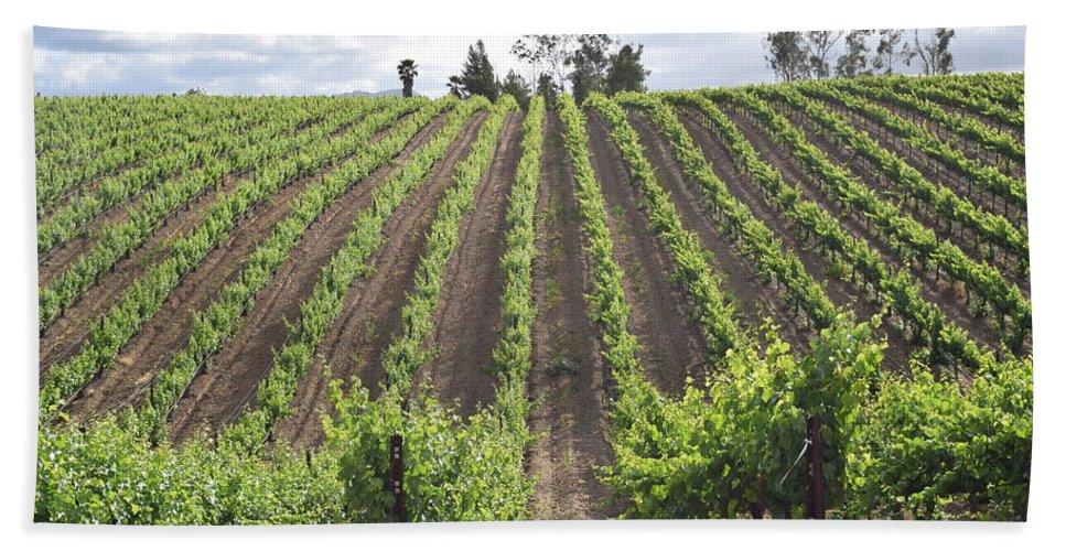 Vineyard Bath Sheet featuring the photograph Growing Season by Steve Scheunemann