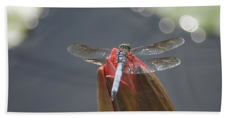 Dragonfly Bath Sheet featuring the photograph Guard Dragonfly... by Rob Luzier