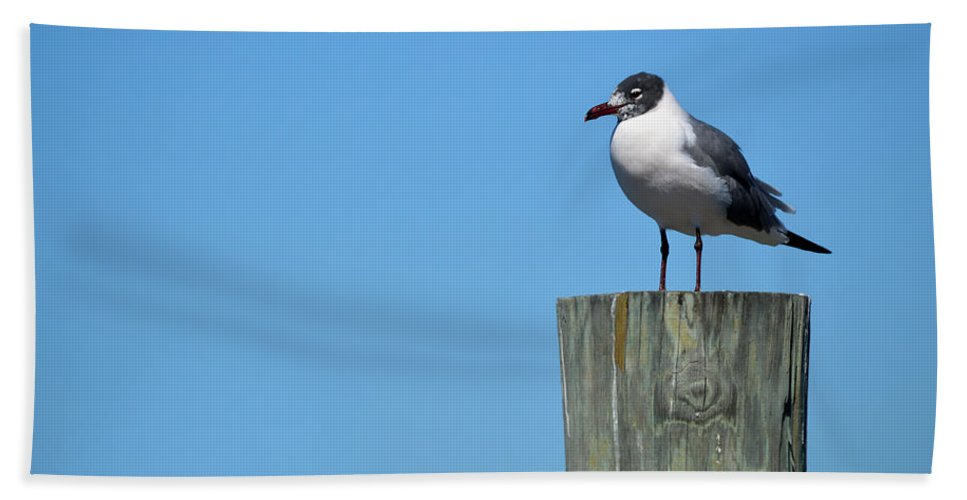 Seagull Bath Sheet featuring the photograph Guard Duty by Linda Kerkau