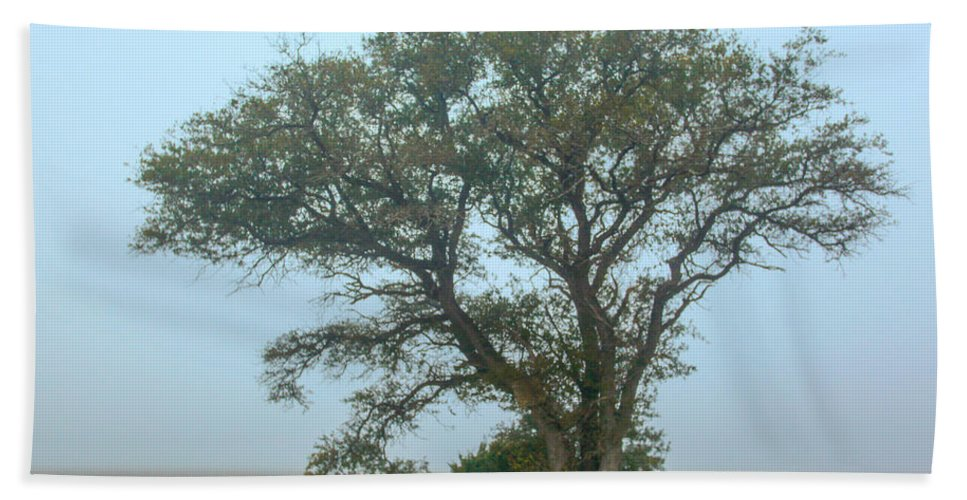 Cedar Island Hand Towel featuring the photograph Guardian Of The Fog by Paula OMalley