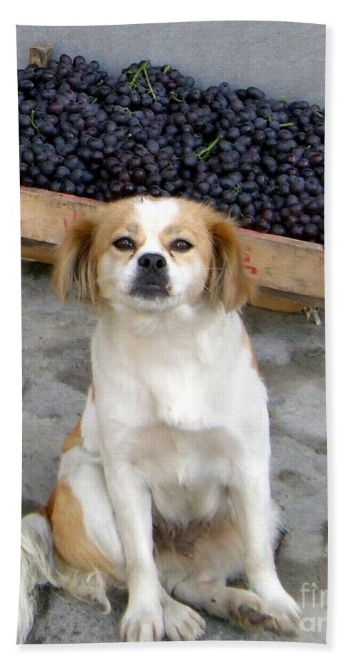 Dog Bath Sheet featuring the photograph Guardian Of The Grapes by Barbie Corbett-Newmin