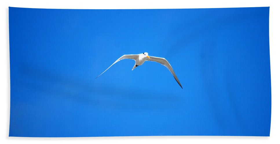 Gull Hand Towel featuring the photograph Gull 001 by Larry Ward