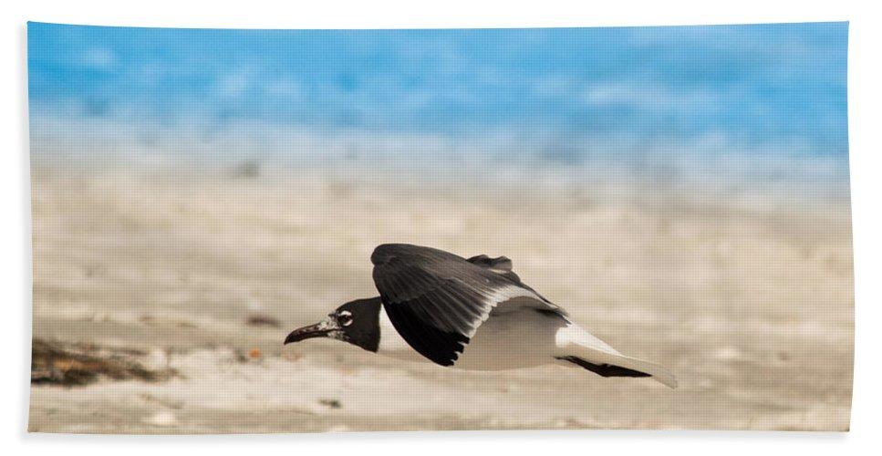 susan Molnar Bath Sheet featuring the photograph Gull At Lido Beach Iv by Susan Molnar