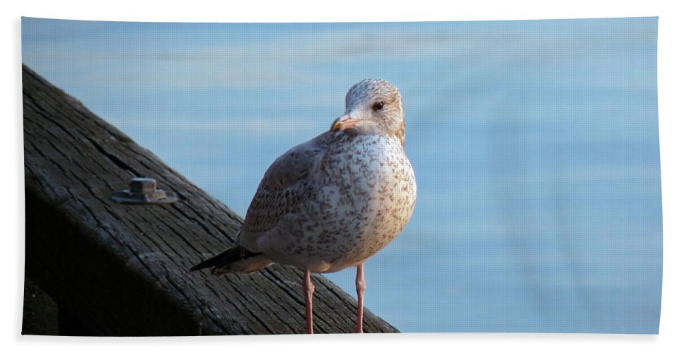 Seagull Hand Towel featuring the photograph Gull On The Pier by Anna Burdette