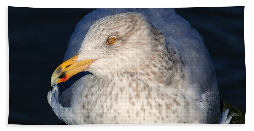 Gull Hand Towel featuring the photograph Gull Resting by Dave Mills
