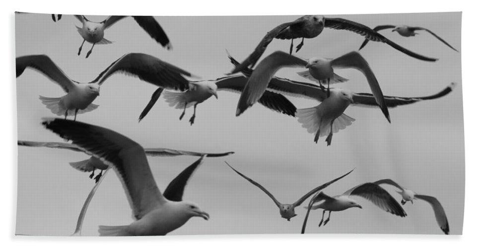 Seagulls Hand Towel featuring the photograph Gulls by Robert Phelan