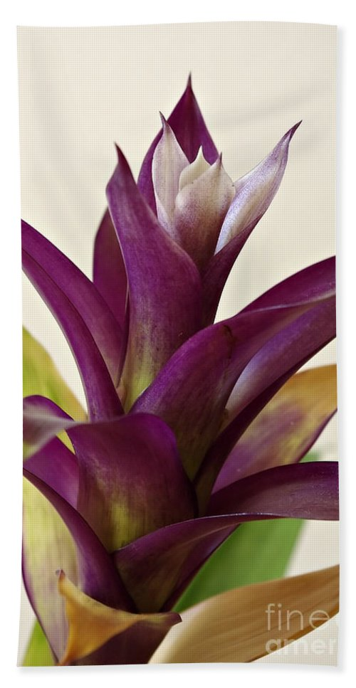 Plant Hand Towel featuring the photograph Guzmania by Zoran Berdjan