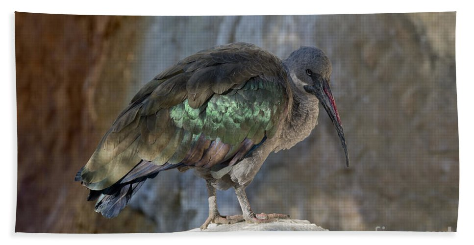 Hadada Ibis Hand Towel featuring the photograph Hadada Ibis by Anthony Mercieca