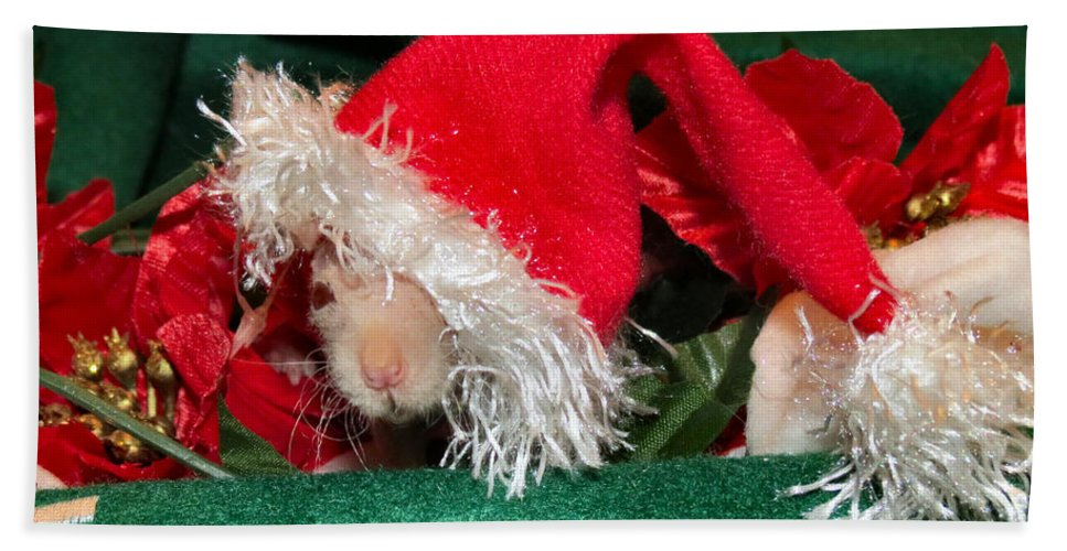 Hairless Bath Sheet featuring the photograph Hairless Christmas by Art Dingo