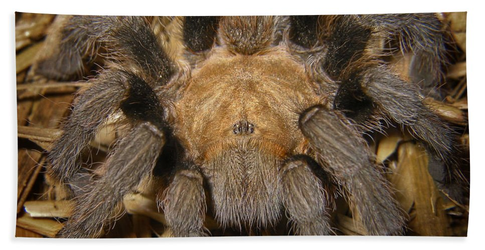 Arachnid Bath Sheet featuring the photograph Hairy by David and Carol Kelly