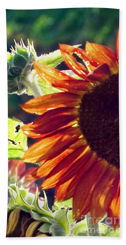 Sunflower Bath Sheet featuring the photograph Half Of A Sunflower by Madeline Ellis
