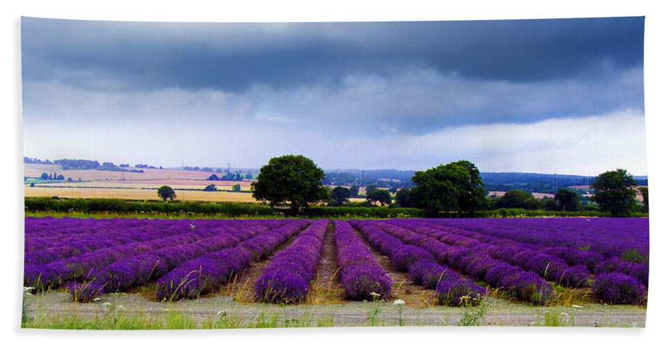 Lavender Field Bath Sheet featuring the photograph Hampshire Lavender Field by Terri Waters