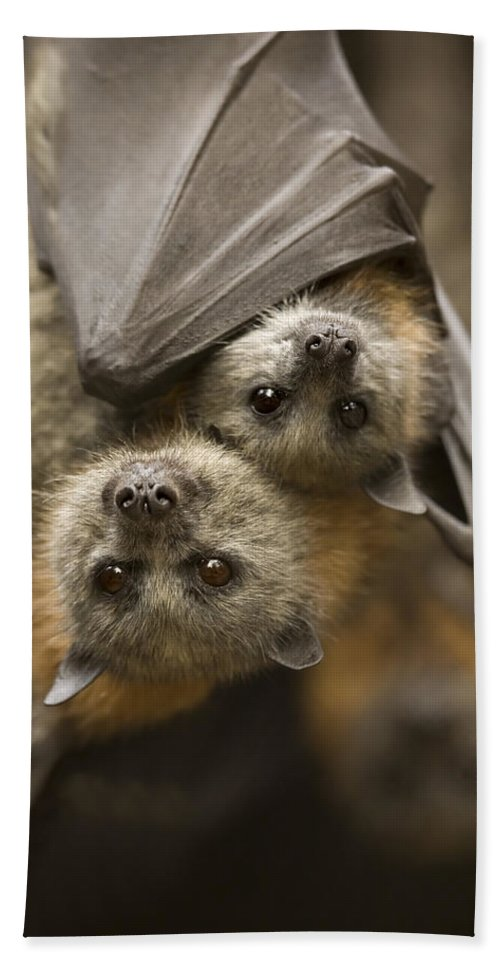 Bats Bath Sheet featuring the photograph Hang In There by Mike Dawson