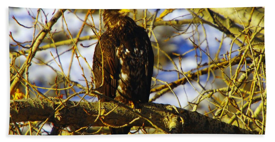 Eagles Bath Sheet featuring the photograph Hanging By The River by Jeff Swan