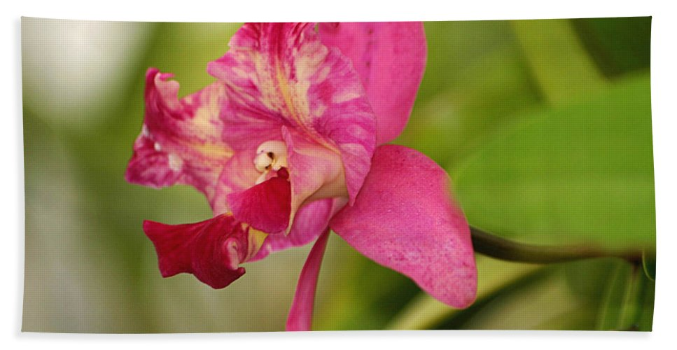 Orchid Hand Towel featuring the photograph Hanging Orchid by Living Color Photography Lorraine Lynch
