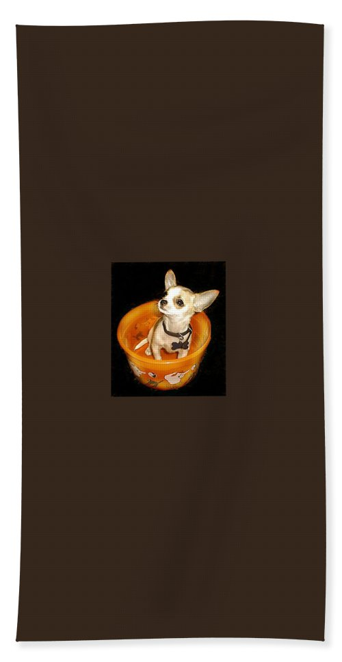 Chihuahua Hand Towel featuring the photograph Happy Halloween II by Leah Delano