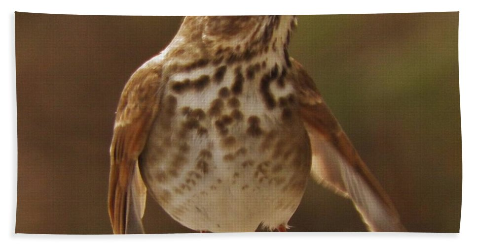 Bird Birds Hand Towel featuring the photograph Happy Hermit Thrush by Earl Williams Jr