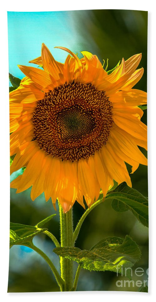 Sunflower Hand Towel featuring the photograph Happy Sunflower by Robert Bales