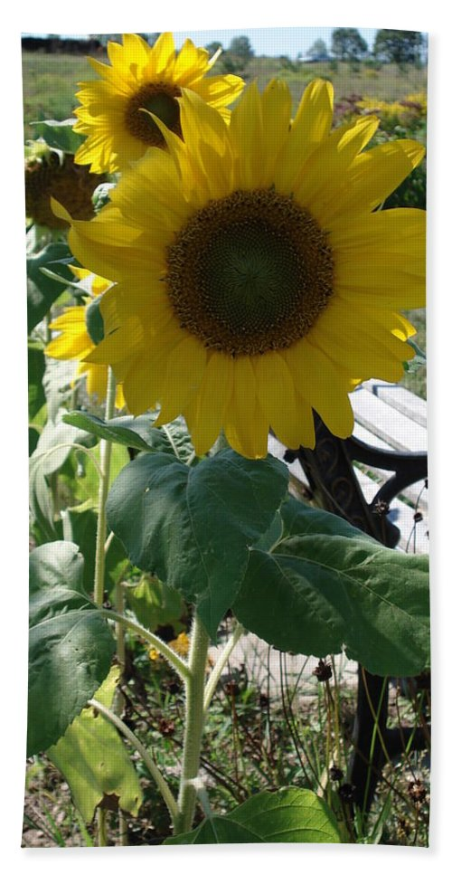 Sunflowers Bath Sheet featuring the photograph Happy Sunflowers by Diane Palmer