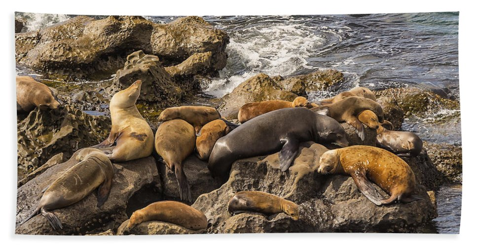 La Jolla Hand Towel featuring the photograph Harem Of Seals by Angela Stanton
