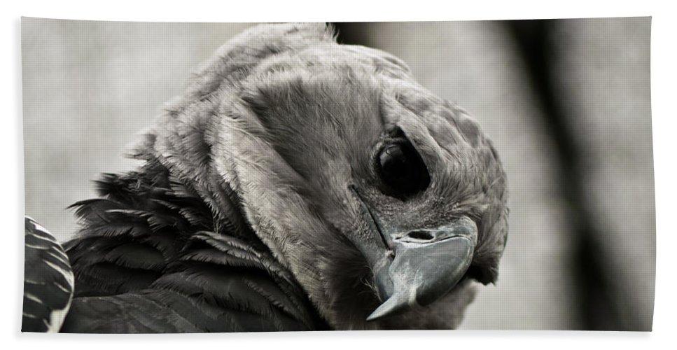 Harpy Bath Sheet featuring the photograph Harpy Eagle Closeup by Jess Kraft