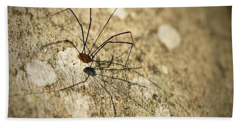 Harvestman Bath Sheet featuring the photograph Harvestman Spider by Chevy Fleet