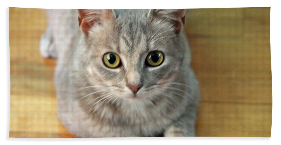 Kitty Hand Towel featuring the photograph Hattie The Kitty by Cynthia Guinn