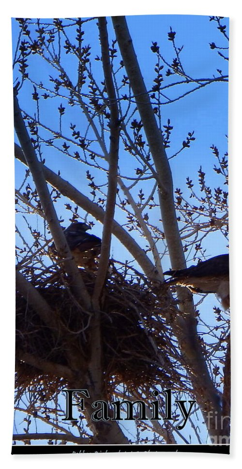 Acrylic Prints Hand Towel featuring the photograph Hawk Family Nesting by Bobbee Rickard