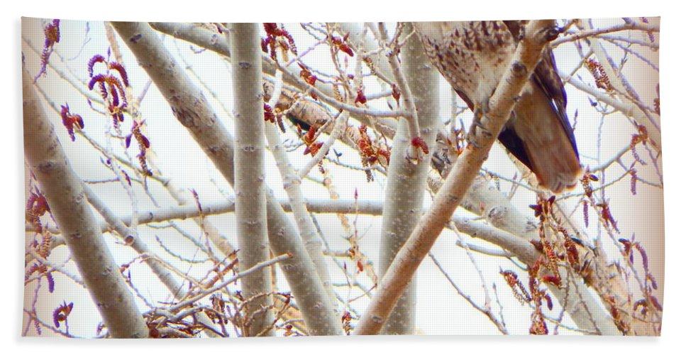 Acrylic Prints Hand Towel featuring the photograph Hawk Nesting IIi by Bobbee Rickard