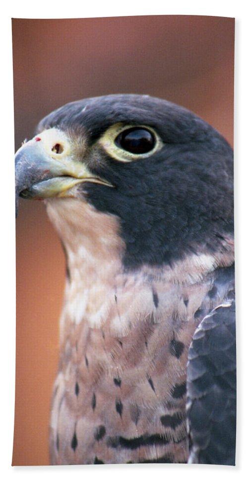 Hawk Bath Sheet featuring the photograph Hawk by Pamela Critchlow