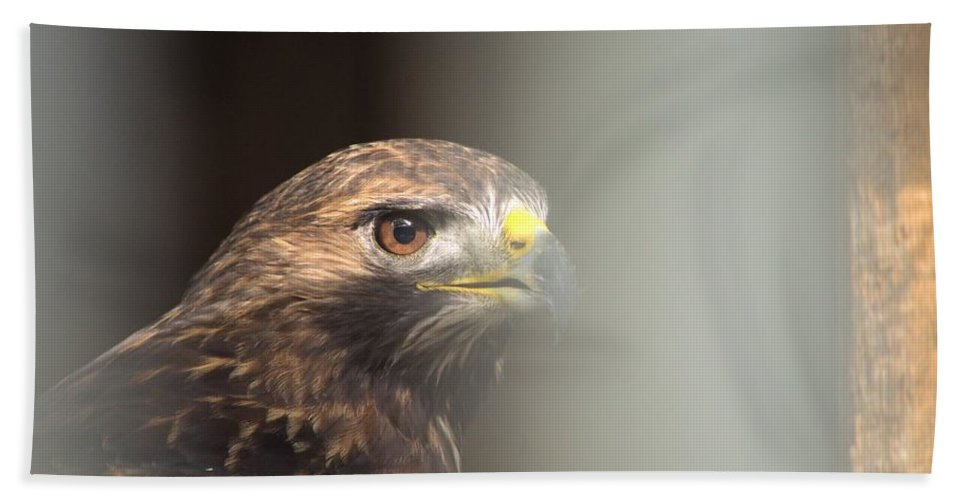 Animal Bath Sheet featuring the photograph Hawk Stare by Bonfire Photography