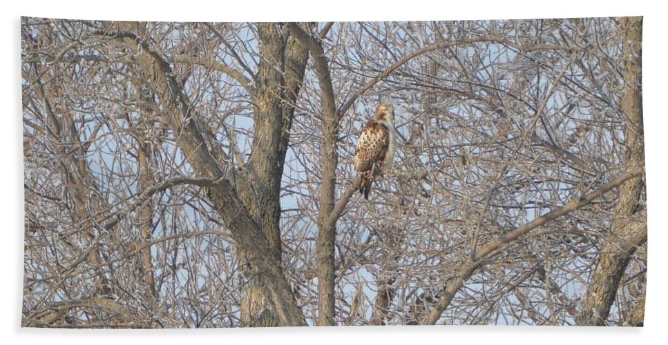 Hawk Hand Towel featuring the photograph Hawkish by Bonfire Photography