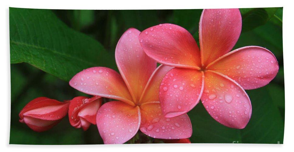 Pink Plumeria Bath Sheet featuring the photograph He Pua Laha Ole Hau Oli Hau Oli Oli Pua Melia Hae Maui Hawaii Tropical Plumeria by Sharon Mau