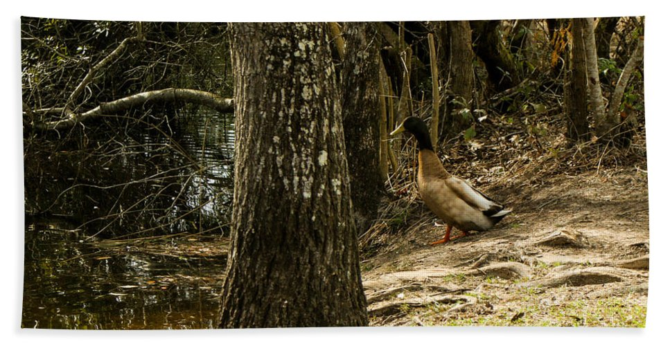 River Ducks Hand Towel featuring the photograph Headed For The River by Mechala Matthews