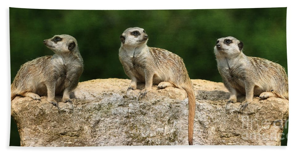 Meerkat Bath Sheet featuring the photograph Hear No Evil See No Evil Speak No Evil by Terri Waters