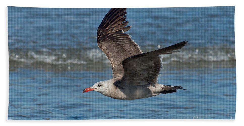 Heermann's Gull Hand Towel featuring the photograph Heermanns Gull by Anthony Mercieca