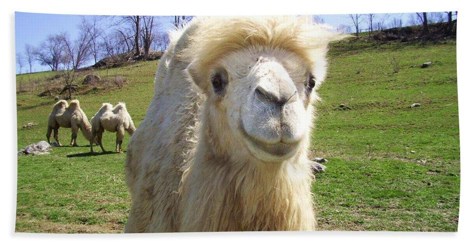 Camel Bath Sheet featuring the photograph Hello by Cynthia Guinn