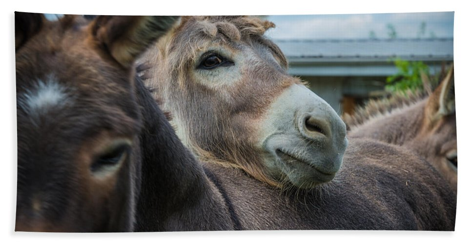 Pennsylvania Hand Towel featuring the photograph Hello Donkey by Kristopher Schoenleber