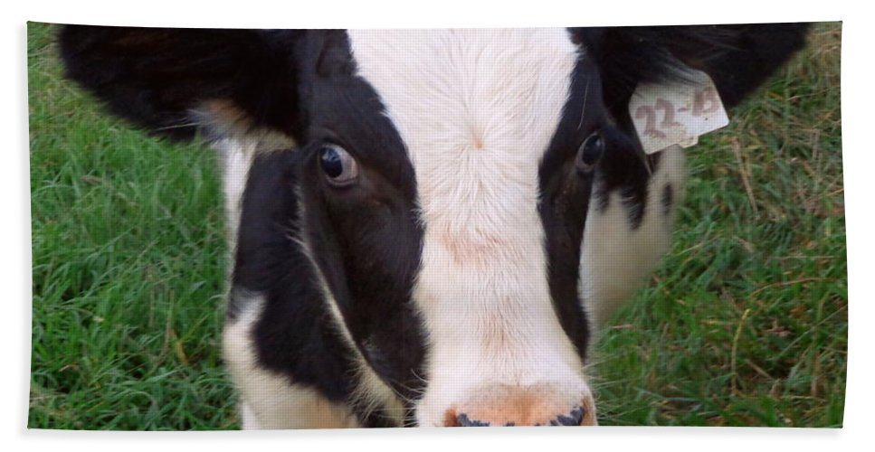 Joseph Skompski Hand Towel featuring the photograph Hello My Name Is Cow by Joseph Skompski