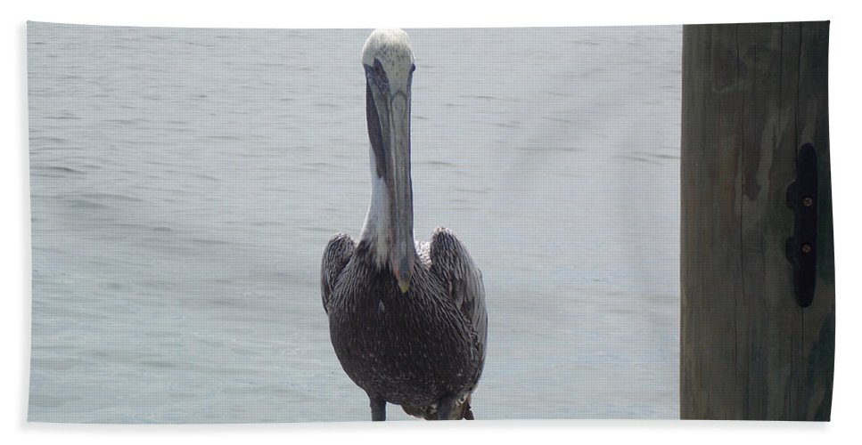 Pelican Bath Sheet featuring the photograph Hello Pelican by To-Tam Gerwe