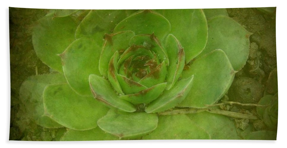Hen And Chicks Hand Towel featuring the photograph Hen And Chicks Plant by Cassie Peters
