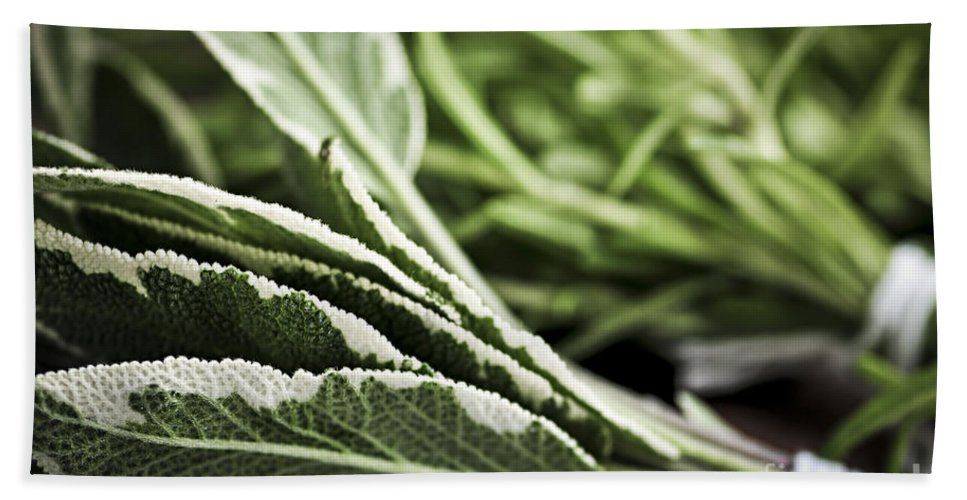 Herb Bath Towel featuring the photograph Herbs by Elena Elisseeva