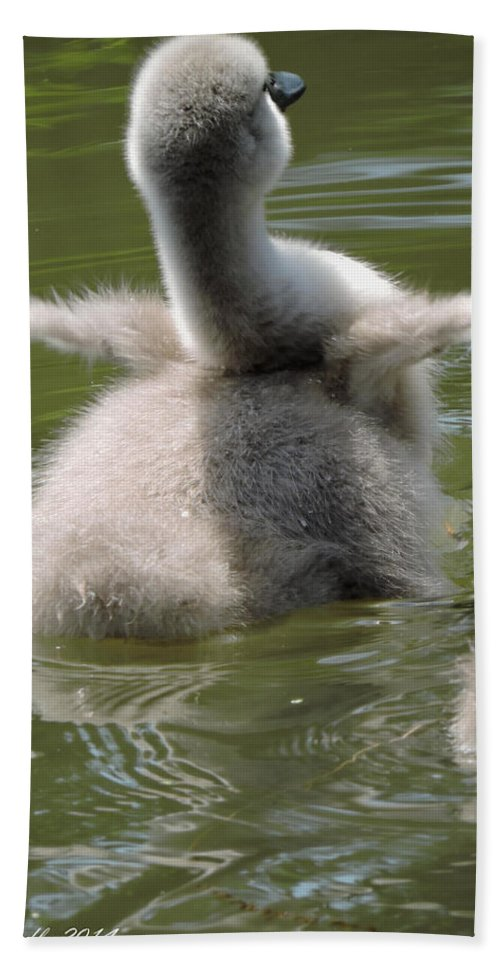 Cygnet Hand Towel featuring the photograph Here I Come by Regine Brindle