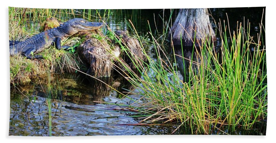 Gator Hand Towel featuring the photograph here I rest my head by Chuck Hicks
